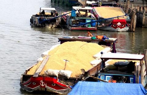 Gạo Việt Nam: Giá rẻ vẫn khó bán
