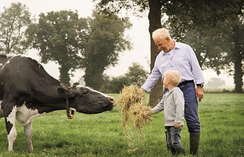 Hạnh phúc như nông dân Hà Lan
