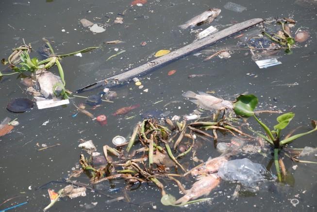 Kênh Nhiêu Lộc - Thị Nghè ô nhiễm do mưa