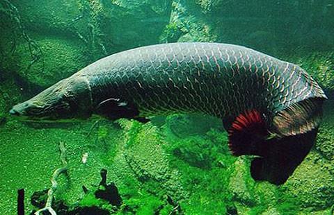Hai con cá hải tượng mất tích bí ẩn