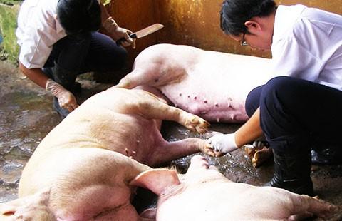 Lãng phí xử lý động vật tạm giữ