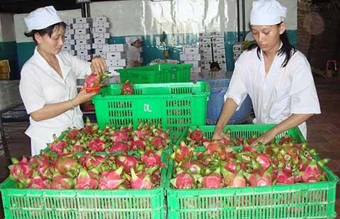 Trung Quốc muốn mua nông sản Việt Nam qua sàn