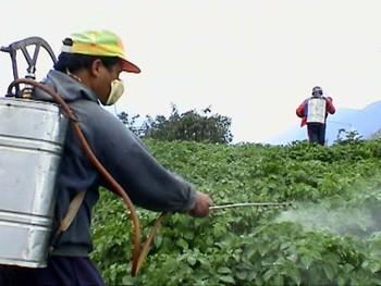 Báo động dư lượng thuốc trừ sâu trên cây chè