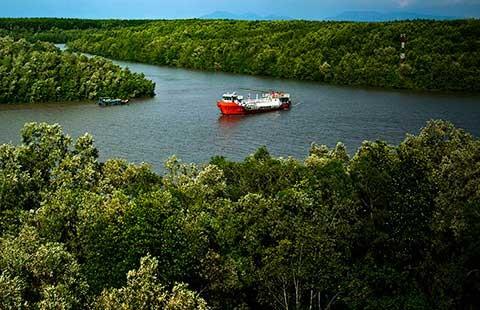 Mở đường xuyên rừng Cần Giờ: Cần thiết không?