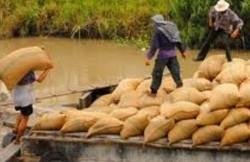 Truy tìm nhóm thương lái lúa tráo tiền lừa dân hàng trăm triệu đồng