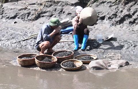 Hạ Long có nguy cơ ô nhiễm than bùn