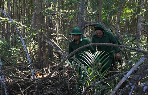 Không thu hồi đất rừng để xây trụ sở
