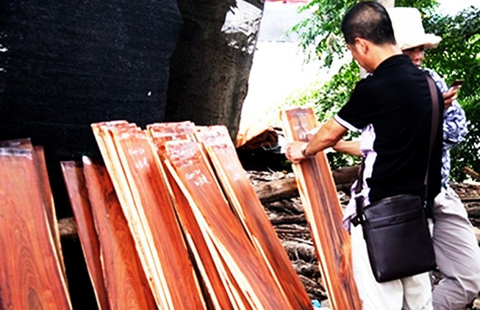 Bán cả 'rừng non' cho Trung Quốc