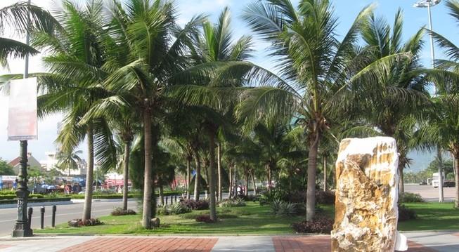 Đề xuất trồng dừa ở nội đô TP.HCM