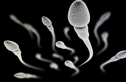 Tác dụng tránh thai cho nam của thuốc ức chế miễn dịch