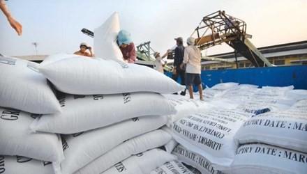 Giá lúa gạo tăng nhờ trúng thầu 'khủng'