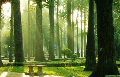 Đã nghe đã thấy: Lại 33 cây xanh nữa sắp 'thọ án'