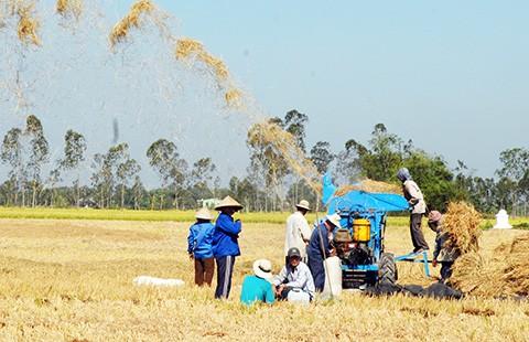 Gạo Việt biến mất trên thị trường hội nhập
