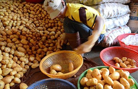 Đà Lạt lại cho khoai tây Trung Quốc vào chợ