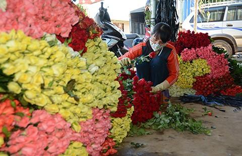 Hoa hồng Đà Lạt tăng giá mạnh dịp 20-11