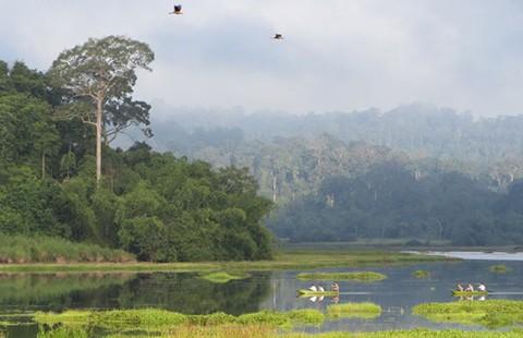Đồng Nai phản ứng dự án đường xuyên rừng Cát Tiên