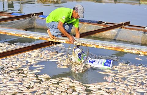 Nước mắt làng cá bè trên sông Đồng Nai