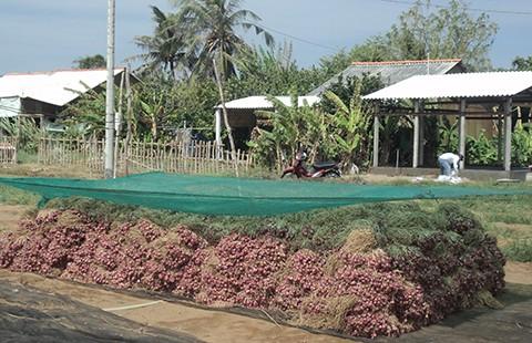 Trà Vinh hỗ trợ chi phí vận chuyển nông sản cho nông dân