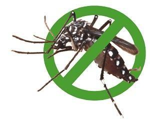 Việt Nam có dùng 'chất gây teo não' Pyriproxyfen để diệt muỗi