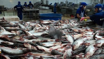 Dân lại treo ao vì giá cá tra thấp nhất sáu năm qua