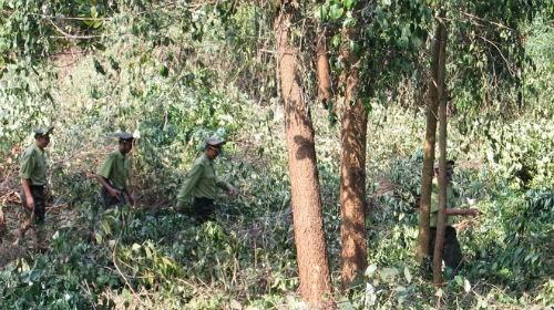 Truy tố ba kiểm lâm nhận tiền 'giải cứu' gỗ lậu