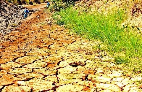 Các tỉnh ĐBSCL đều bị nước mặn xâm nhập