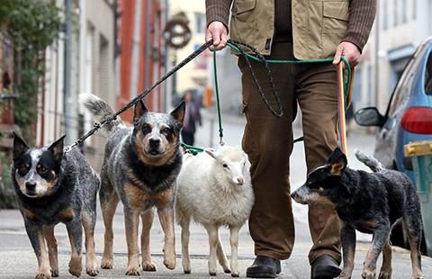 Cách phòng vệ và giải cứu trước chó dữ