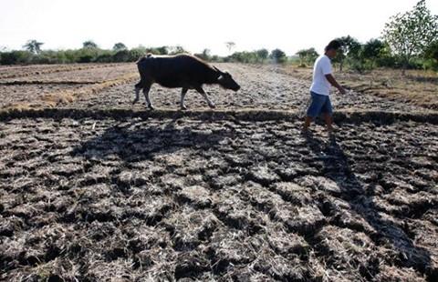 Miền Tây: Giữa tháng 4 mới có nước ngọt