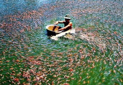 Thủy sản muốn được hoàn thuế trước