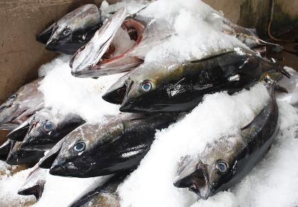 Việt Nam xuất khẩu cá ngừ sang 107 thị trường