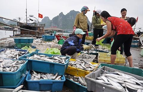 Chuyên gia Đức, Mỹ bắt đầu tìm nguyên nhân cá chết