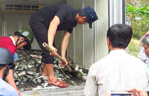 Tìm nguyên nhân cá chết tại Huế