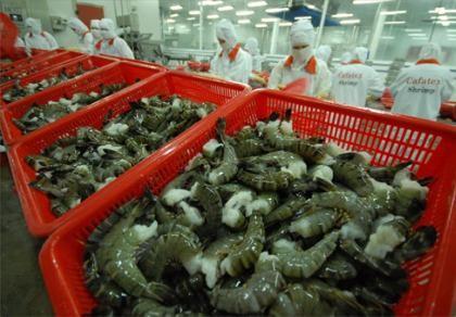 Tôm Việt được mua với giá cao tại Mỹ