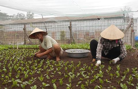 Người Sài Gòn gắn camera trồng rau sạch