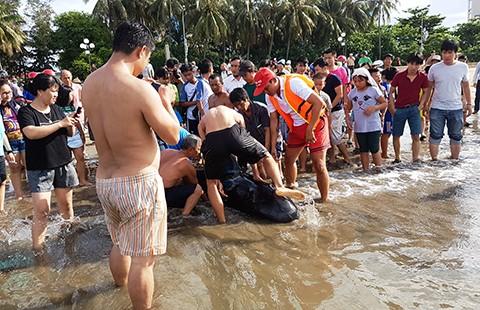 Nỗ lực cứu cá heo dạt vào biển Quy Nhơn