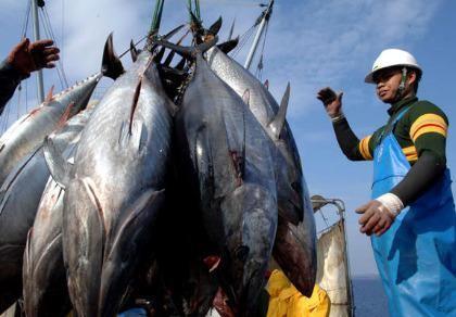 Đề nghị cấp chứng nhận thủy sản khai thác nơi DN có nhà máy chế biến