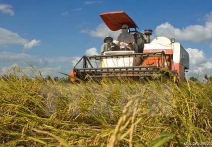 Bàn cách 'giải cứu' ngành gạo khỏi khó khăn