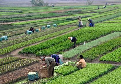 Nhật tăng mạnh đầu tư vào nông nghiệp
