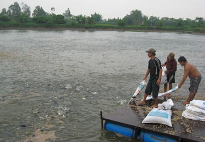 Làm rõ vụ cấp giấy chứng nhận hơn 800 sản phẩm thức ăn thủy sản