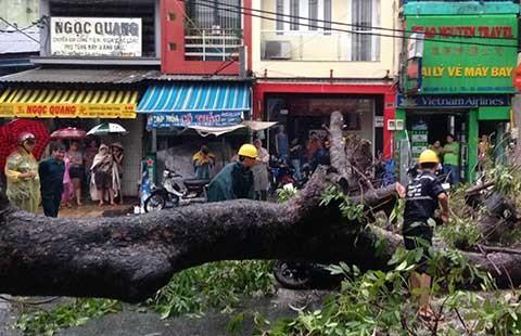 TP.HCM: Sáu ngày, 60 cây xanh ngã đổ