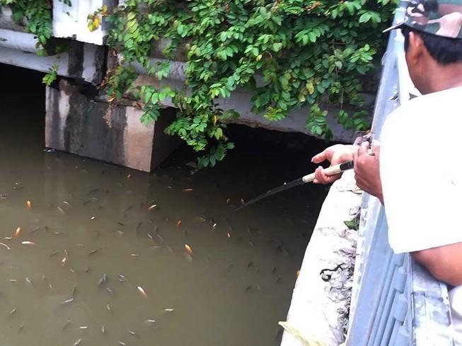 Cá ngoi đặc kênh Nhiêu Lộc - Thị Nghè