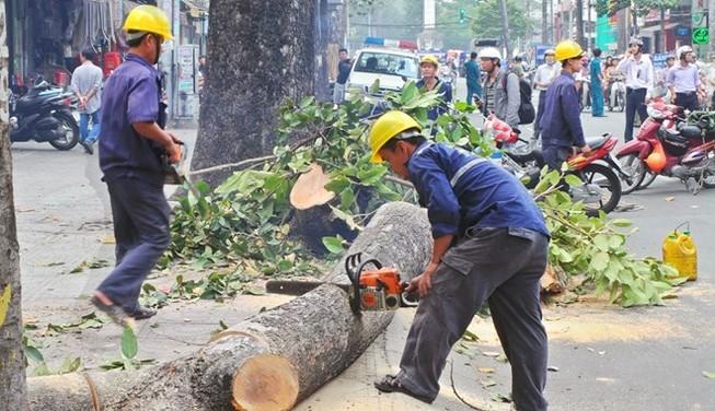 UBND TP Hà Nội thúc tiến độ xử lý vụ chặt cây xanh