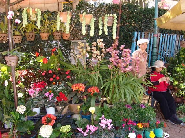 Xây dựng chợ đầu mối hoa Đà Lạt theo mô hình Nhật