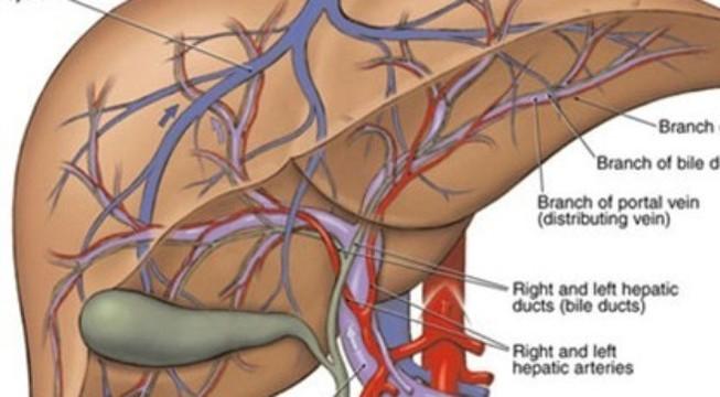 Những dấu hiệu cho thấy gan bị nhiễm độc