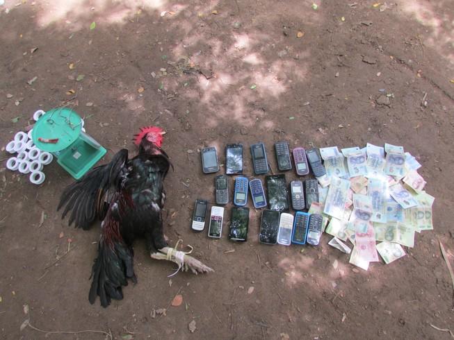 Đồng Tháp: Phá một tụ điểm đá gà ăn tiền