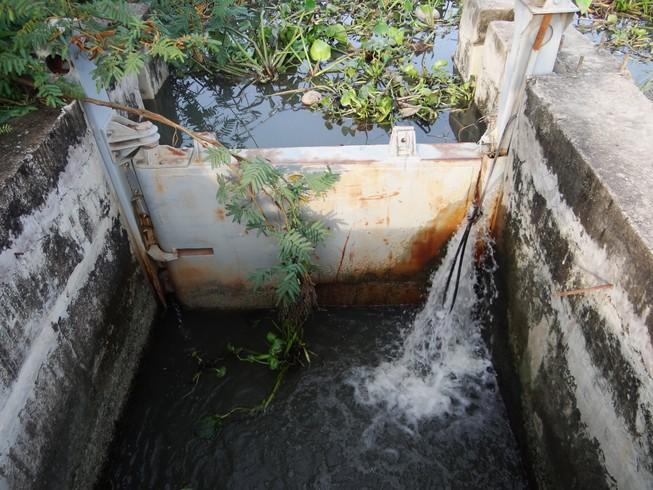 Cống ngăn triều không ngăn nổi nước
