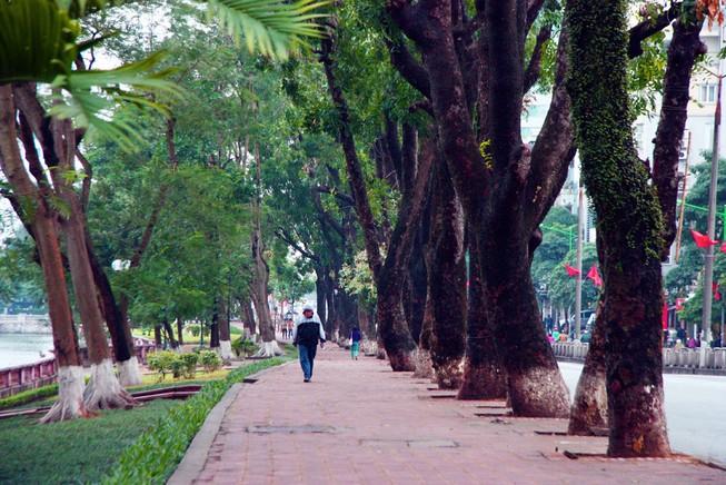 Nhìn lại hàng cây cổ thụ đường Kim Mã trước ngày bị đốn hạ