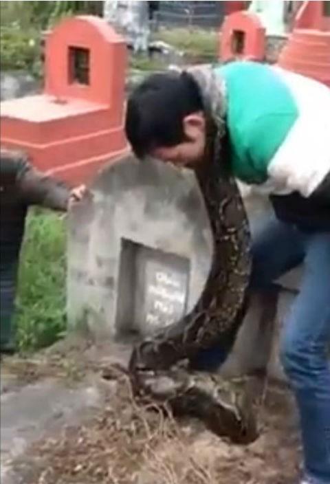 Giải cứu trăn khổng lồ bị mắc kẹt trong ngôi mộ cũ