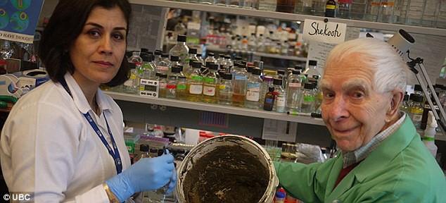 Phát hiện loại đất sét chống lại siêu khuẩn đa kháng sinh