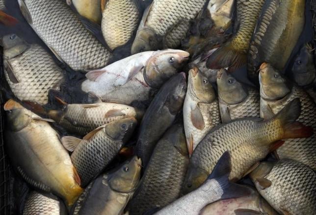 Ăn quá nhiều cá khi mang thai khiến bé dễ bị tiểu đường